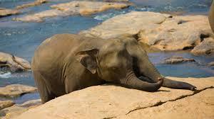 download wallpaper 2560x1440 elephant cub trunk walk family