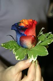 multi colored roses multi colored boutineer