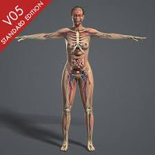 Human Body Female Anatomy Anatomy 3d Models Plasticboy
