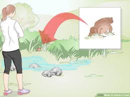 How To Get Rid Of Cane Toads In Backyard 3 Ways To Catch A Toad Wikihow