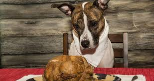 tips to keep your pet safe this thanksgiving