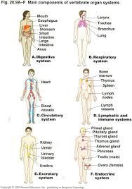 Female Anatomy Organs Female Organ Anatomy Chart Female Anatomy Human Anatomy Charts