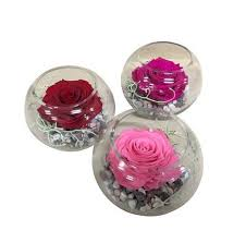 preserved roses lasting preserved in a fish bowl