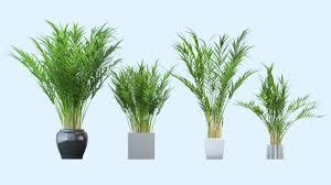 easy houseplants neon pothos plant types and identifications