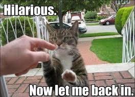 Cute Funny Animal Memes - 25 hilarious animal memes