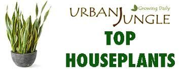 top house plants top houseplants sansevieria