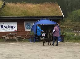 affenpinscher klubb norge utstilling