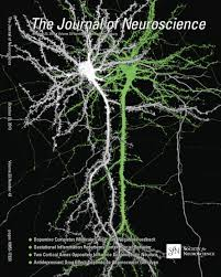 activation of axonal receptors by gaba spillover increases somatic
