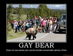 Gay Bear Meme - animal demotivational pictures gay bear does not care about