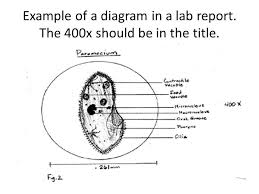 example lab report 10 laboratory report templates free sample