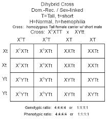 Dihybrid Cross Punnett Square Worksheet Punnett Squares