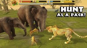 cheetah simulator android apps on google play