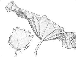 lotus flower drawing find this pin and more on tattoos lotus