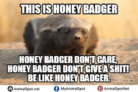 Meme Honey Badger - pictures of honey badger memes png