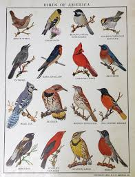 bird species images reverse search picture with outstanding