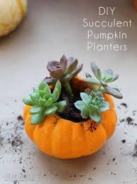 how to make mini succulent pumpkin planters the hip homestead