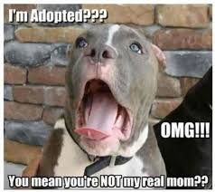 Funny Animals Meme - im adopted funny cute memes animals dogs dog animal meme lol humor