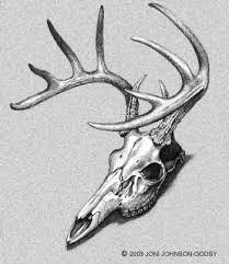 drawn dear skull pencil and in color drawn dear skull