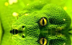 a green snake wallpapers moving wallpaper free download from shareware connection
