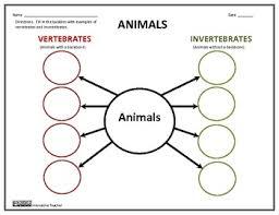 free printable worksheets vertebrates invertebrates vertebrates and invertebrates by innovative teacher tpt