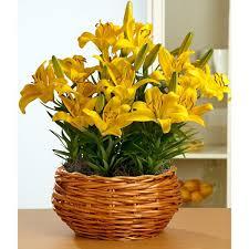 25 Easy Houseplants Easy To by 28 Easy Flowering Houseplants 25 Easy Houseplants Easy To