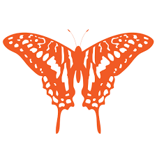 butterfly clipart orange free stock photo public domain pictures
