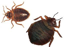 Remedy For Bed Bug Bites Home Remedies For Bed Bug Bites Home Remedy Sleep