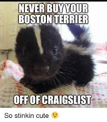 Boston Terrier Meme - never buy your boston terrier off of craigslist so stinkin cute