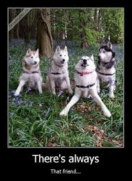Funny Husky Memes - that type of friend animal humour and laughter