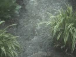 Landscaping Evansville In by Combs Landscaping Of Evansville In It Only Floods When It Rains