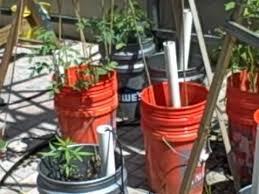 Indoor Vegetable Container Gardening - 17 best indoor kitchen garden images on pinterest gardening