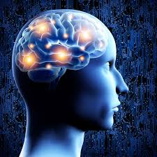 light up your brain brains neurons computers and neuroscience oxford education blog
