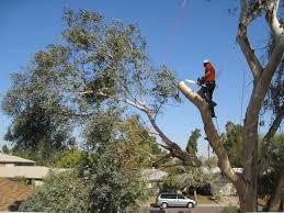 tree removal break o day