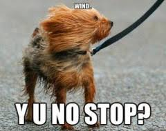 Wind Meme - wind wind wind fairy tales odd quirks and such