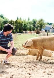 comment cuisiner un cochon pluma de porc ibérique en cocotte au thym aux girolles et au jus