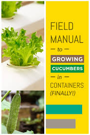 tutorial growing cucumbers in containers like a pro sproutabl