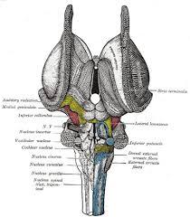 Brainstem Mass Midbrain Radiology Reference Article Radiopaedia Org