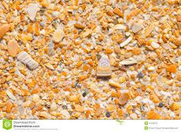 seashell at ocean beach backdrop wallpaper stock photo image