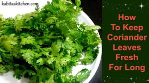 how to keep coriander leaves fresh for long useful kitchen tip