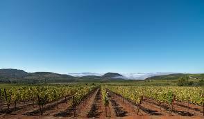 wines u0026 vines