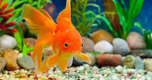 pet fish names all the best fish in 2017