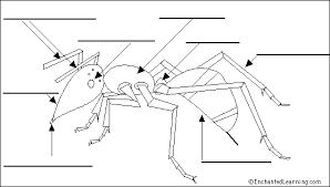 label ant external diagram printout enchantedlearning