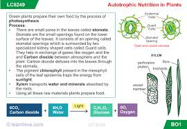 learnhive cbse grade 7 science nutrition in plants lessons