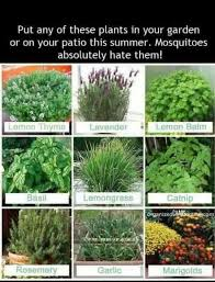 Best 25 Pebble Patio Ideas On Pinterest Landscaping Around by Best 25 Landscaping Around Patio Ideas On Pinterest Plants