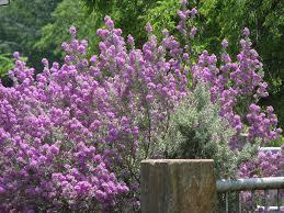 landscape design phoenix cenzio easy care arizona landscaping beauty desert crest press
