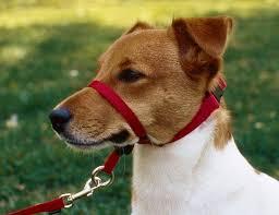 pets types pet collars u2013 mooch mooch pets