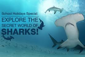 explore secret sharks aquarium u2013