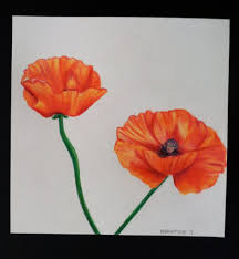 original colored pencil poppy drawing by retrorigamarole on etsy