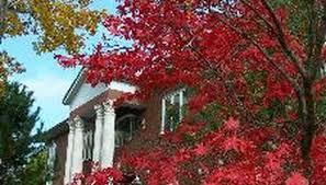 the best ornamental trees for sun garden guides