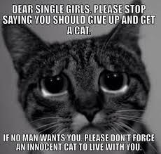 Cat Meme Ladies - to all the single ladies cat humour and hilarious